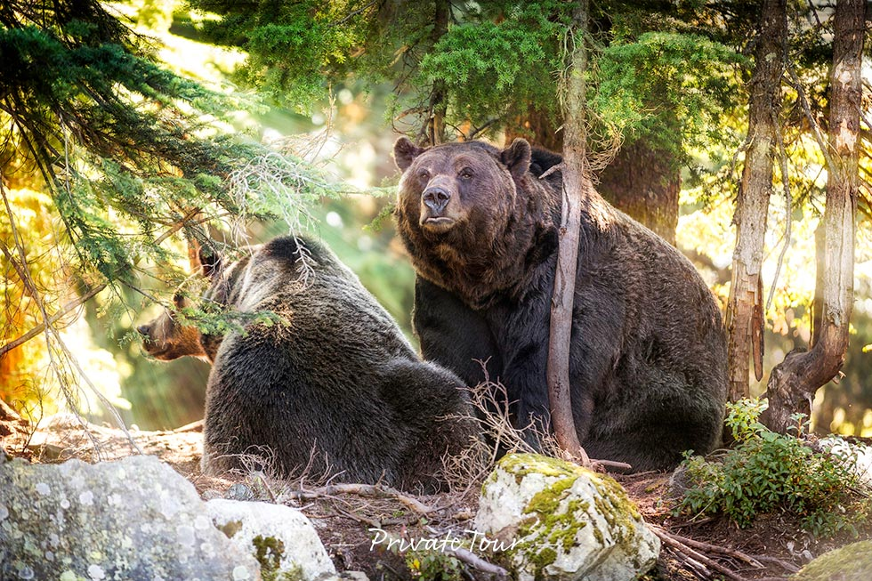 breakfast with the bears grouse mountain reviews